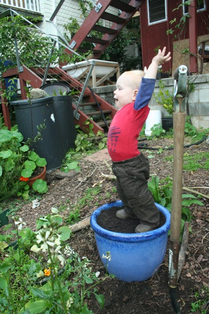 planting the oregano - readying the pot at 14.5 months