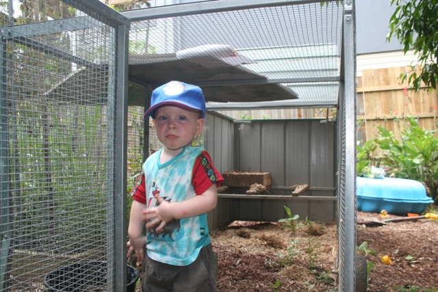 preparing the chicken coop for the new arrivals...