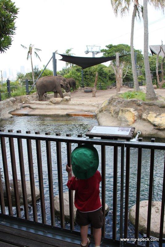 elephant spotting at Sydney's Taronga Zoo